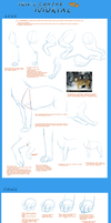 CanineTutPt3-Legs,Paws,Tails by Jeakilo
