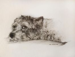 Darcy, Westie Mix by J-E-M
