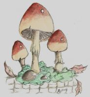 Toadstools by TemperTempest