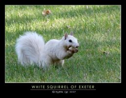 White Squirrel of Exeter by Momma-Cat