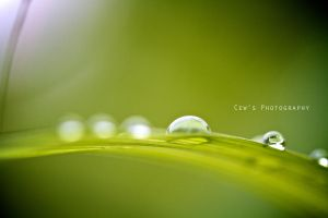 Water Droplets 1 by Neocalz23
