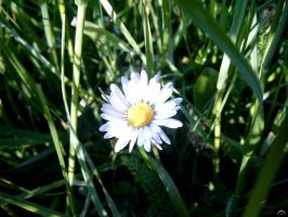 Smile hidden in the grass by maor
