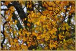 Fotosketcher Autumn by Tailgun2009