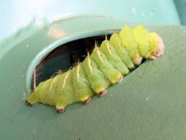 Awesome Caterpillar by melie97
