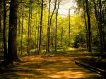 That Which Lies Beyond the Yellow Brick Road by SharpPhotoStudio