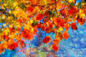 Colours of Autumn by amrodel