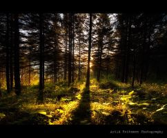 Last light in the forest... by uberfischer
