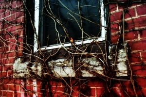 Abandoned Vines by microgrooves