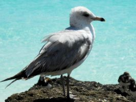 Seagull by MiketheSeagull