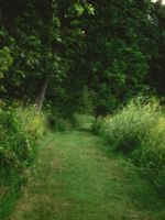 Summer Paths by midnightstouchSTOCK