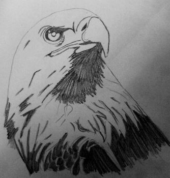 Eagle by godgott