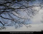 Tree 5-Stock by tempestazure-Stock
