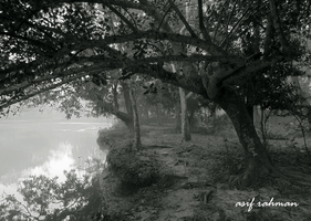The Calm nature BNW 2 by Skyline46
