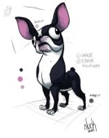 Boston Terrier by ChuckDoodles
