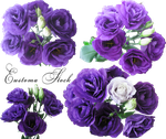 Violet Eustoma set by Redilion