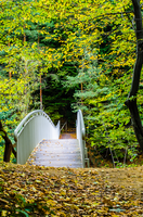 Bridge in the Forest by marrciano