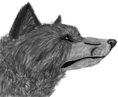 Wolf by Rhymeable