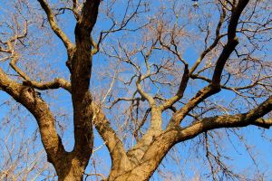 Branching Out by jguy1964