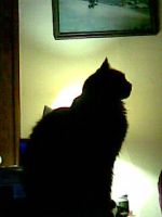 silhouette of a hungry cat by badsasquatch