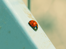 Little Ladybug.. by Lonewolf-Eyes