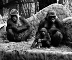 The Gorilla's Family Portrait by roamingtigress