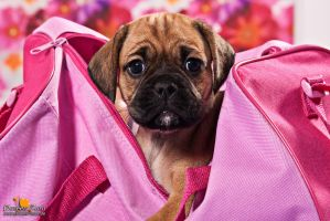 Puggle Pink by Kirikina