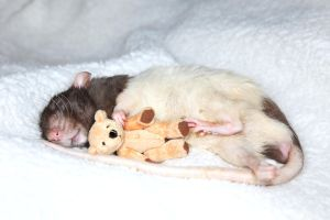 Jeffrey and his Teddy 2 - stock image by NickiStock