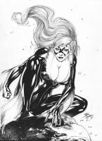 BLACK CAT - PENCIL and INK - by IAGO MAIA by Ed-Benes-Studio