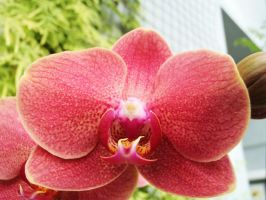 Tropical orchid 7 by WolfyKaia