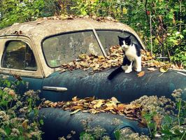 Cat and Car by Thespianna
