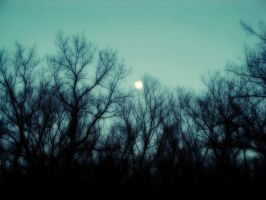 Moon and Trees by josafisch