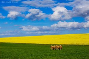 Meadow Gangsters by hougaard