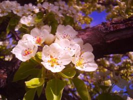 White Blooms 5 by flamingpig