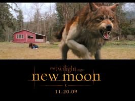 New Moon Jake Wolf poster by Stephanie-Chivas