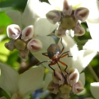 a bug in the flowers by lahiena