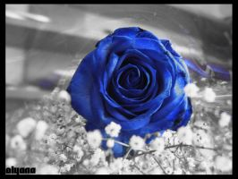blue rose by olyana
