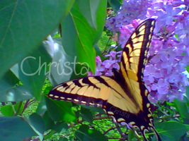 On Butterfly Wings. by Lil-Christa