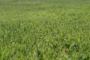 Grass 2 by fl8us-stock