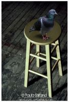 Stool Pigeon by hatefueled