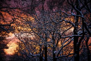 Winter Evening I by Bildbeute