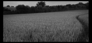 Path in the Field by TheAcolyte