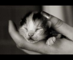 kitty in my hands. by ThErEaLDoLLyFrikka