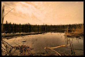 Flooded Beaver Dam by NOS2002