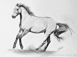 Dun Horse by Kennelwood