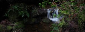 Mini rainforest waterfall by TheNicklesPickles