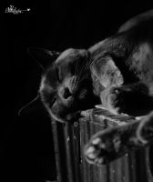 Cat Nap by PhotographsByBri
