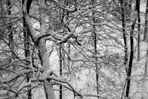 snowtrees by janda