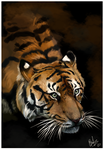 Tiger painting. by loveaddictx3