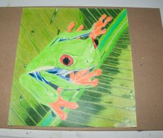 red eyed tree frog by mikesphotos-drawings