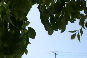 .:LimeLeaves:. by ColorMyMemory